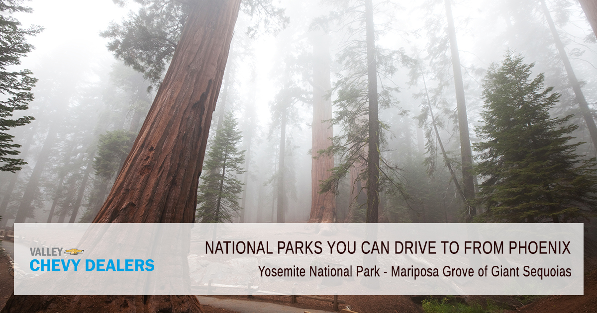 Yosemite National Park  Mariposa Grove of Giant Sequoias